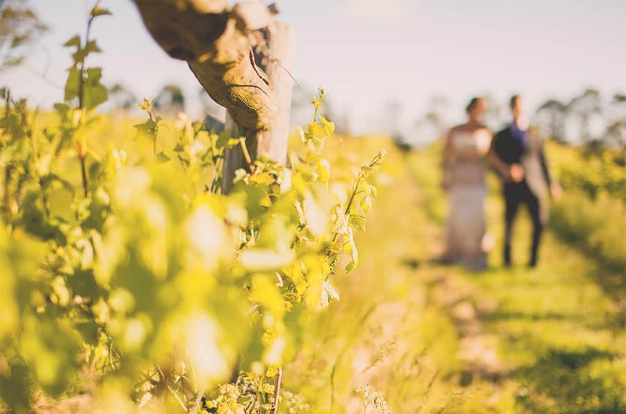 Vineyards Wedding Venue Captain's Creek Winery - Daylesford Wedding Photography